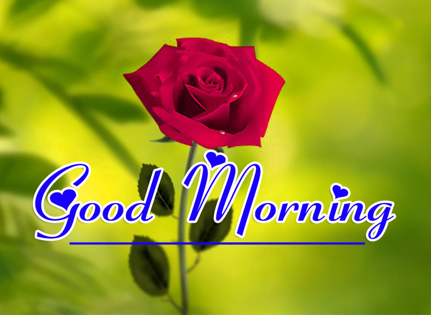 Good Morning HD Images Pics Wallpaper With Red Rose