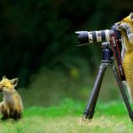1452+ Funny Animal Photos Images Wallpaper HD