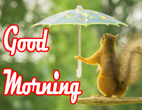 Funny Good Morning Images Photo HD Download