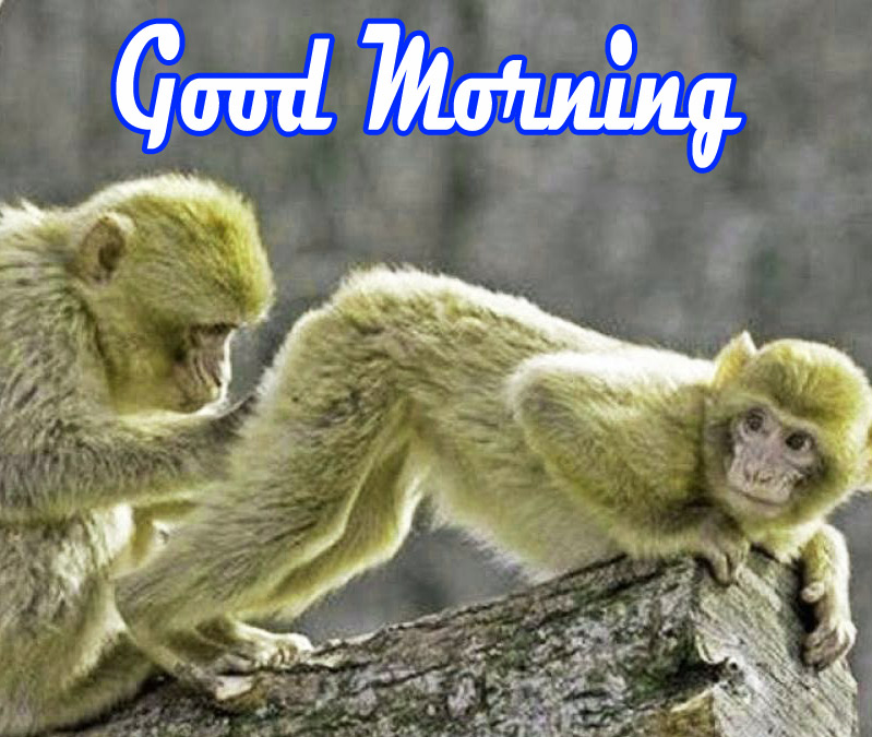 Funny Good Morning Images Wallpaper Free Download