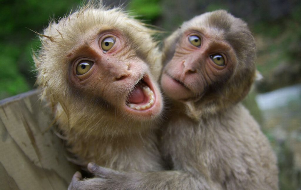 Funny Monkey Images Wallpaper Photo Pics Download