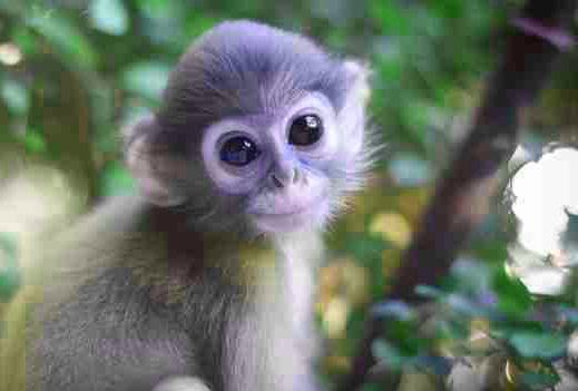 Funny Monkey Images Wallpaper Pics Free Download