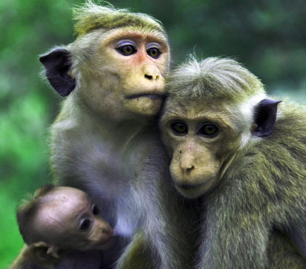 Funny Monkey Images Pics Download