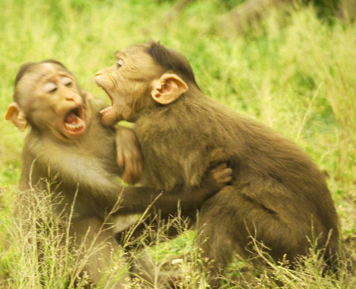 Funny Monkey Images Pics Photo Download