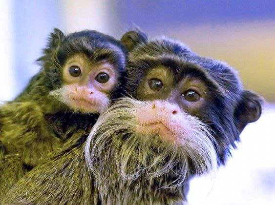 Funny Monkey Images Photo Wallpaper Download