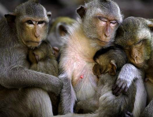 Funny Monkey Images Photo pics DOWNLOAD