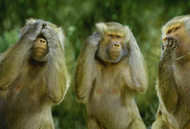 Funny Monkey Images Photo Wallpaper Free Download
