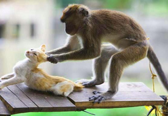 Funny Monkey Images Wallpaper Pics Download