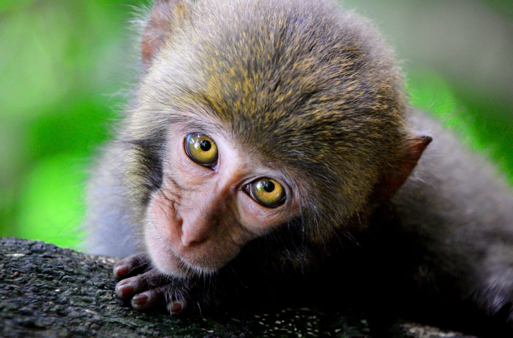 Funny Monkey Images photo Pic Download