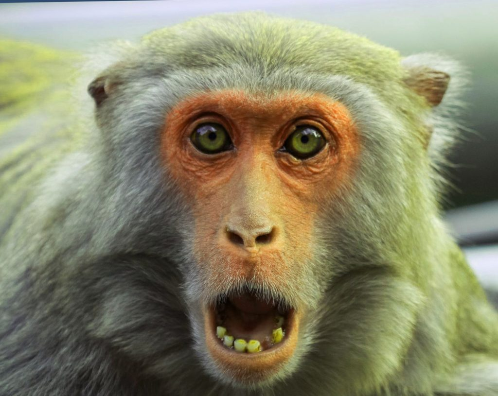 Funny Monkey Images Pics pictures Free Download