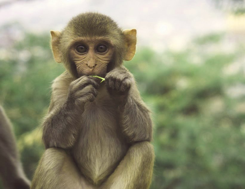 Funny Monkey Images Pics Pictures Download