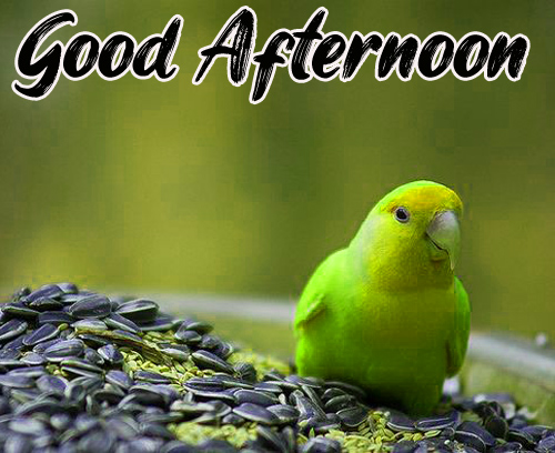 Good Afternoon Images Wallpaper Photo
