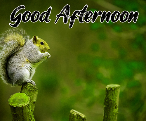 Good Afternoon Images Free Wallpaper