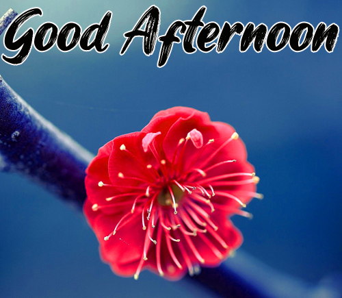 Best Good Afternoon Images Pics Free