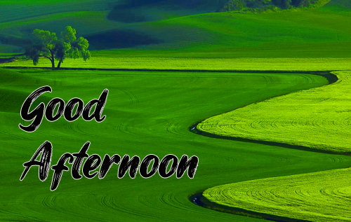 Good Afternoon Images Pictures Hd Free