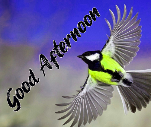 New Good Afternoon Images Pictures
