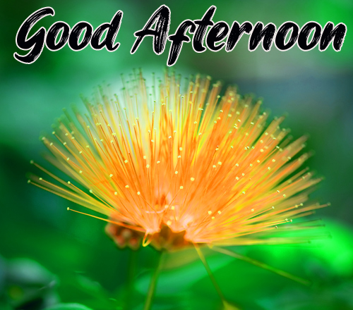 New Good Afternoon Images Photo Free