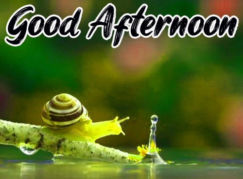 Good Afternoon Images Wallpaper hd