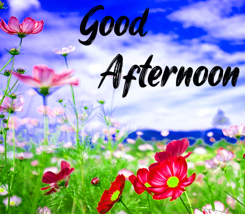 New Good Afternoon Images Photo Free Download