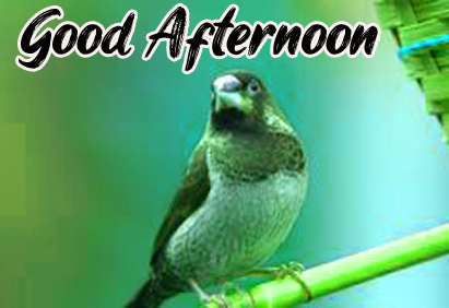 Good Afternoon Images Hd Free