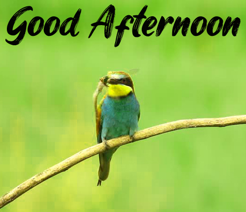 New Good Afternoon Images Wallpaper Photo
