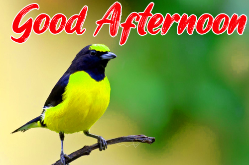 Best Good Afternoon Images Pics For Wallpaper
