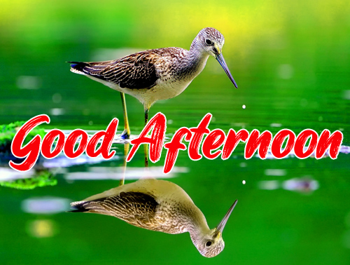 Good Afternoon Images Free Download