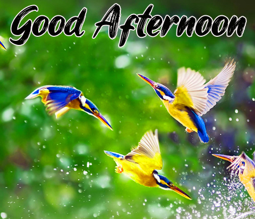 Free Good Afternoon Images Photo Download