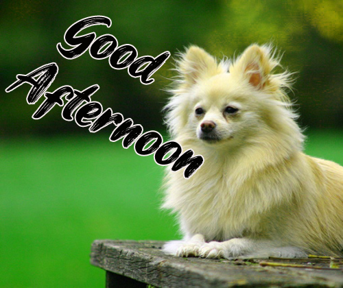 Good Afternoon Images Wallpaper For Friends