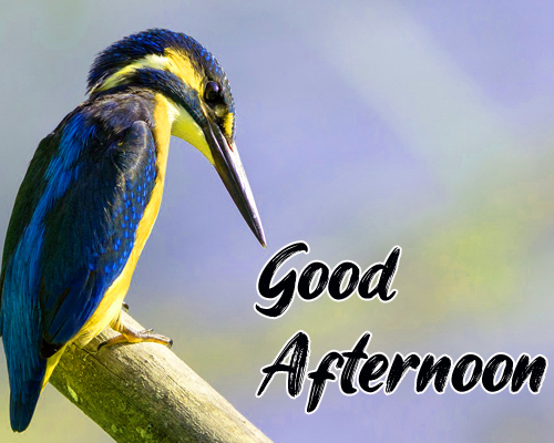 New Good Afternoon Images Photo