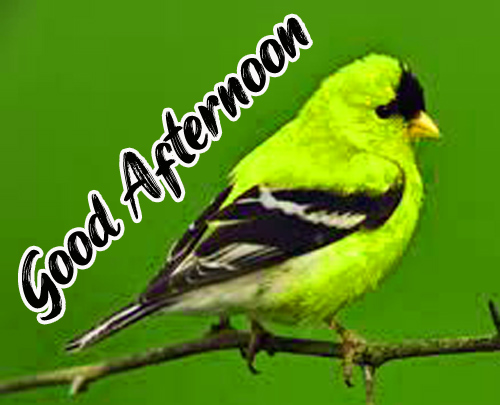 Latest Good Afternoon Images wallpaper