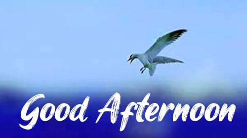 Good Afternoon Images Photo Free Download