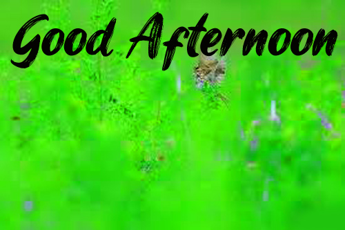 Good Afternoon Images Wallpaper Free