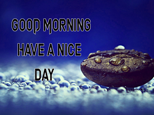 BestGood Morning Have A Nice Day Images Photo Pics Free
