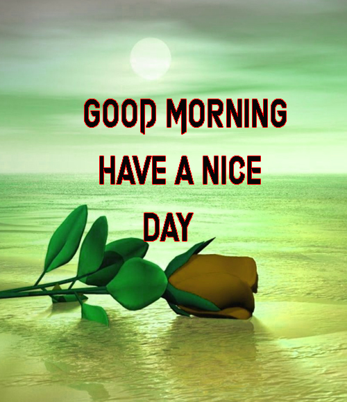 BestGood Morning Have A Nice Day Images Photo