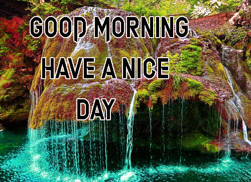 Good Morning Have A Nice Day Images Free Pics Download