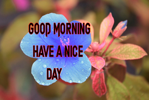 Good Morning Have A Nice Day Images Wallpaper Free
