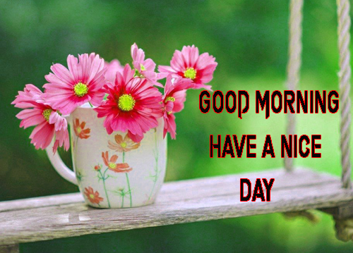 NewGood Morning Have A Nice Day Images Photo Download