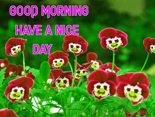 Download FreeGood Morning Have A Nice Day Images