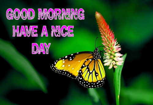 Good Morning Have A Nice Day Images