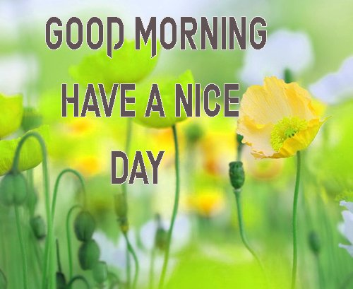 Good Morning Have A Nice Day Images Photo For Wife