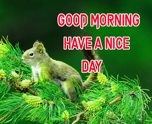 Good Morning Have A Nice Day Images Pics For Wallpaper