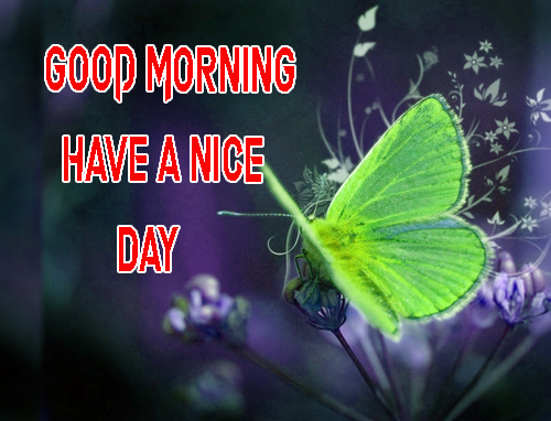Good Morning Have A Nice Day Images Free Download Photo