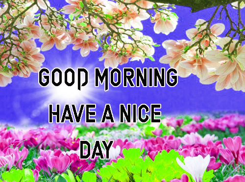 Good Morning Have A Nice Day Images Hd Free Download