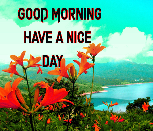 Good Morning Have A Nice Day Images Pictures Wallpaper