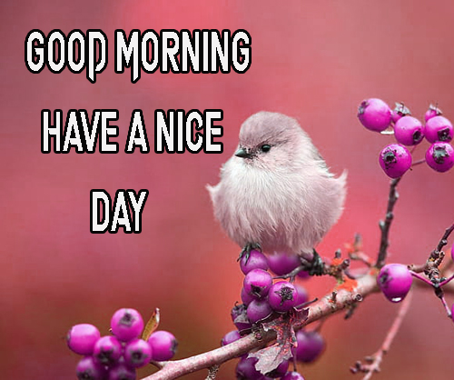 Free Wallpaper Good Morning Have A Nice Day Images