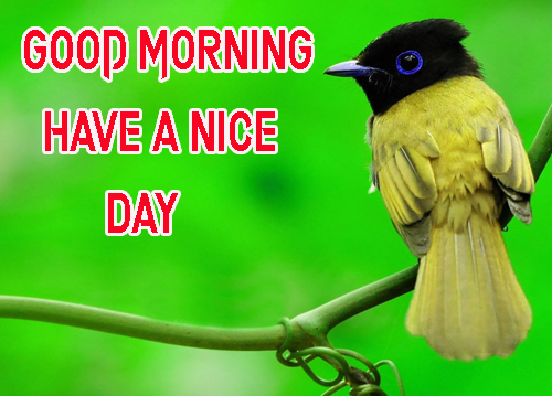Good Morning Have A Nice Day Images Free Wallpaper