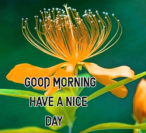 BestGood Morning Have A Nice Day Images Photo Free Download