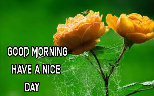 Good Morning Have A Nice Day Images Free Hd Photo