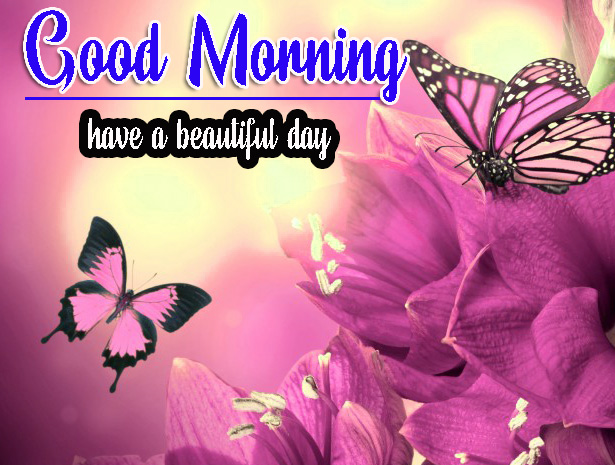Cute Good Morning HD Images  Wallpaper